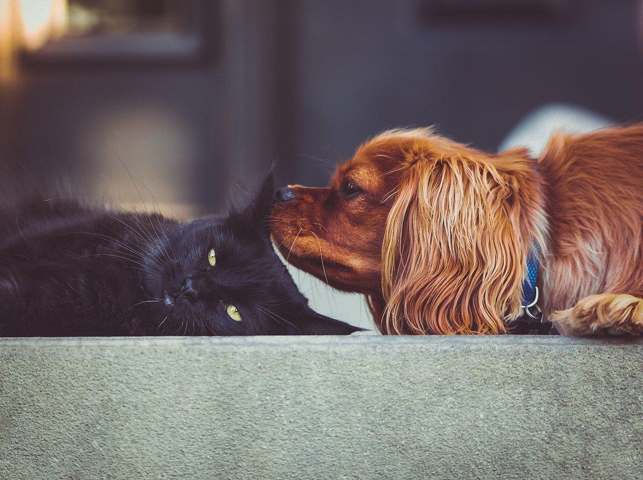 Beginner Animal Communication – Part 1