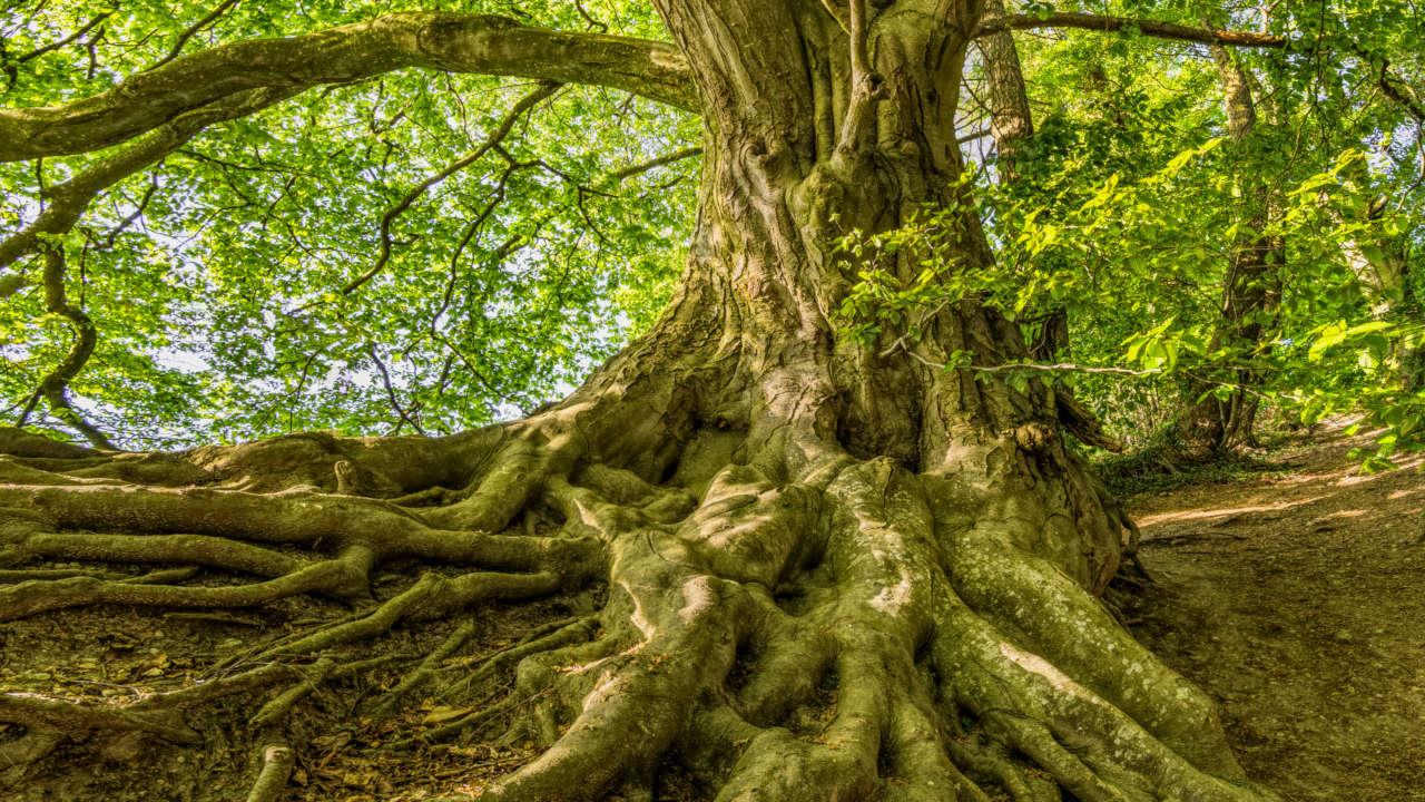 Shapeshifting via the World Tree